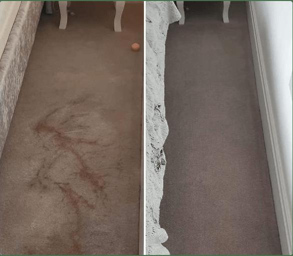 Carpet Cleaning Woollahra